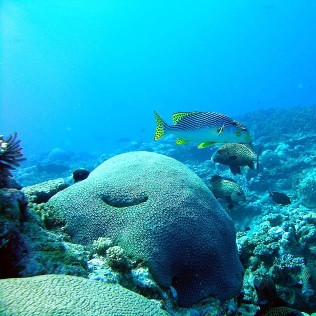 Récif intérieur de Boulari