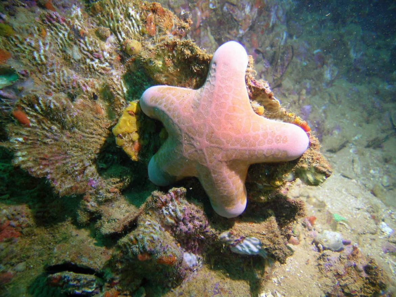toile-de-mer-11-Prony.jpg
