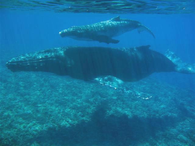 baleines-2.jpg