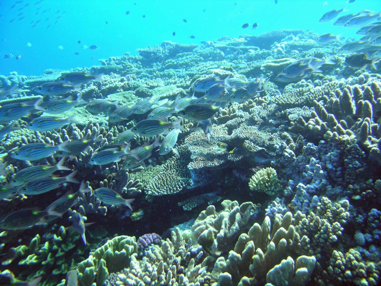 fonds-coraliens-25.jpg