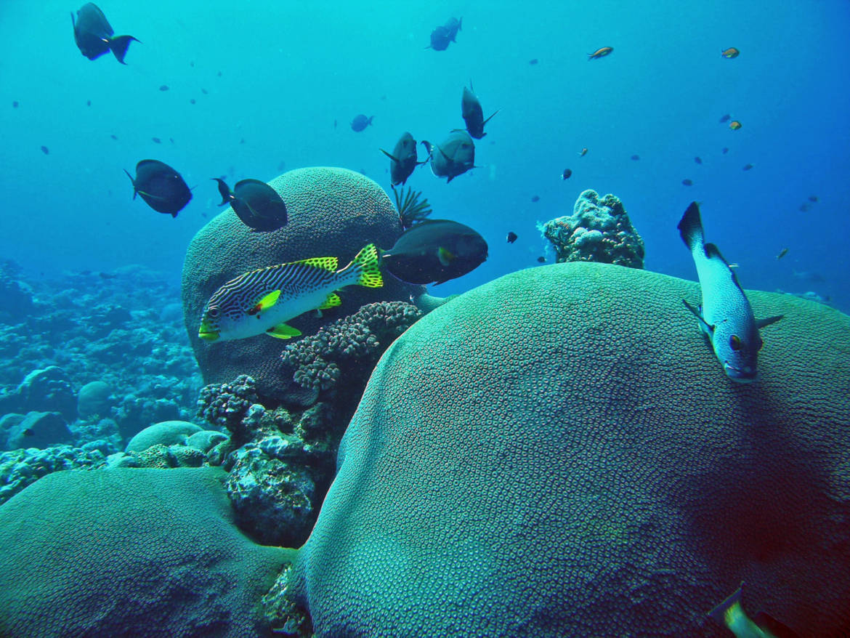 fonds-coraliens-3.jpg