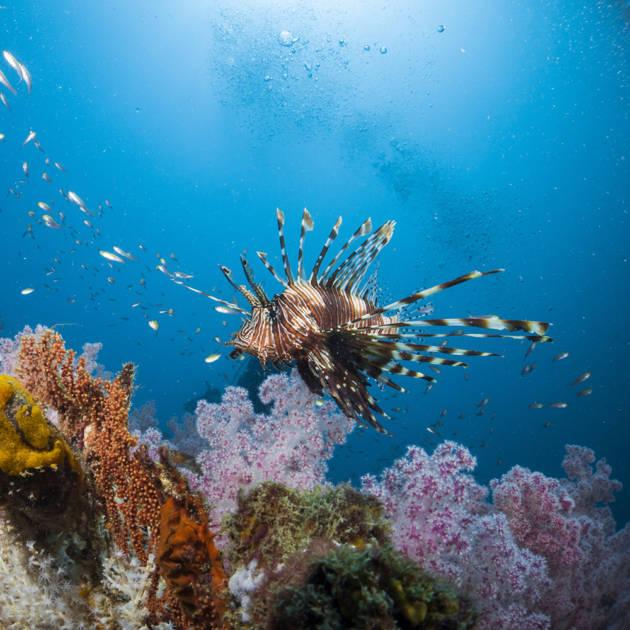 Récif Tabou (site de plongée n°13)